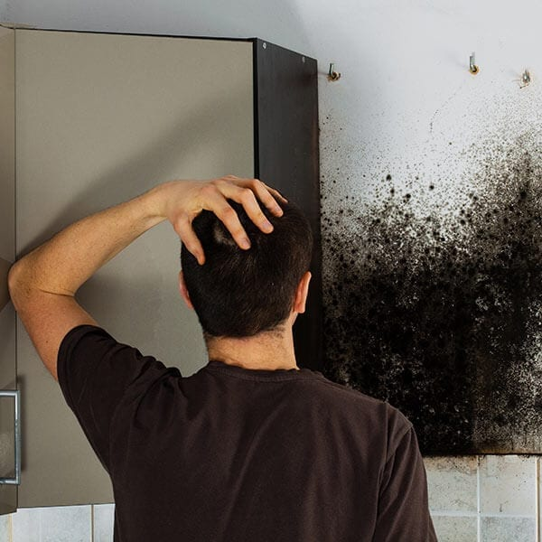 mold inspection Springfield IL