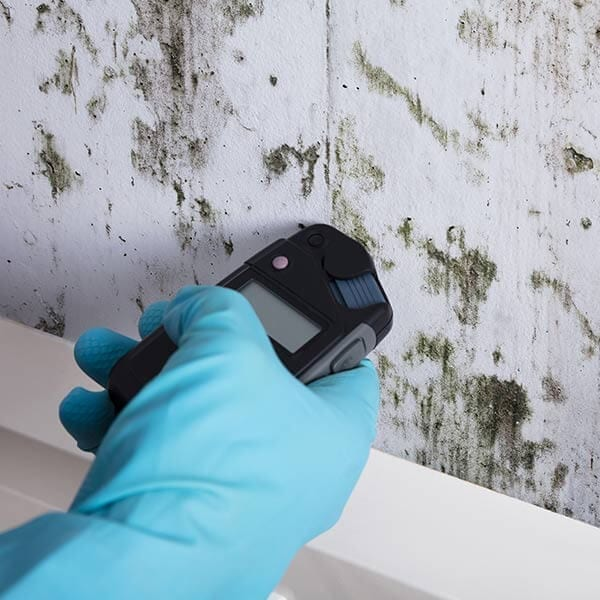 mold testing springfield il