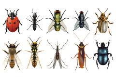 insect removal service in bethalto il