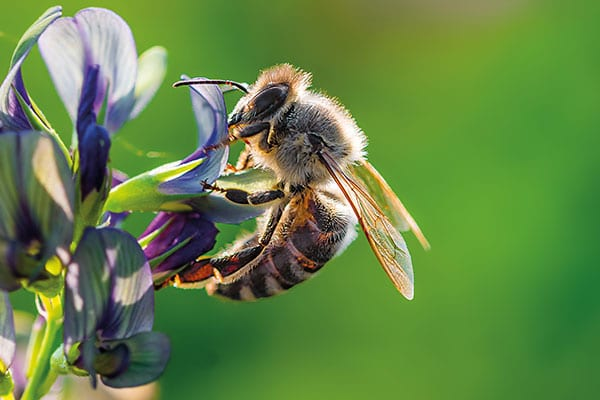 bee removal service in alhambra il