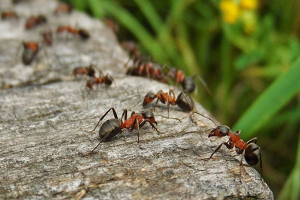 ants removal specialists carpenter illinois