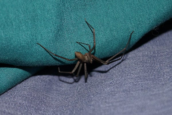 spider removal specialists in carpenter illinois