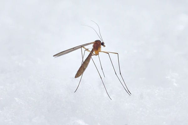 mosquito infestation in collinsville il