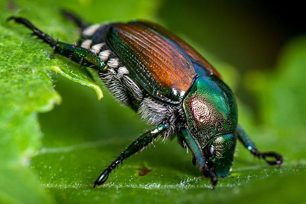 bugs removal service in cottage hills illinois