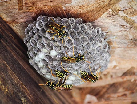 pests like wasps will sting more than once in Livingston, IL