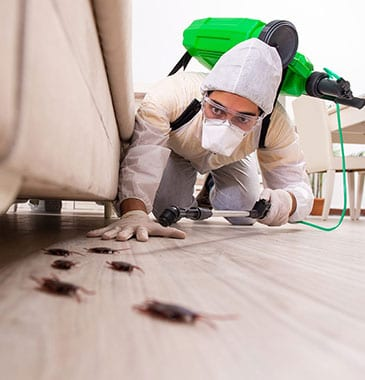 myths about pests in Livingston, IL