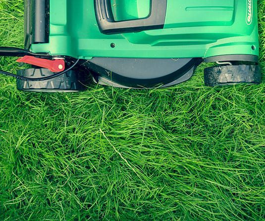 mowing your lawn prevents insects