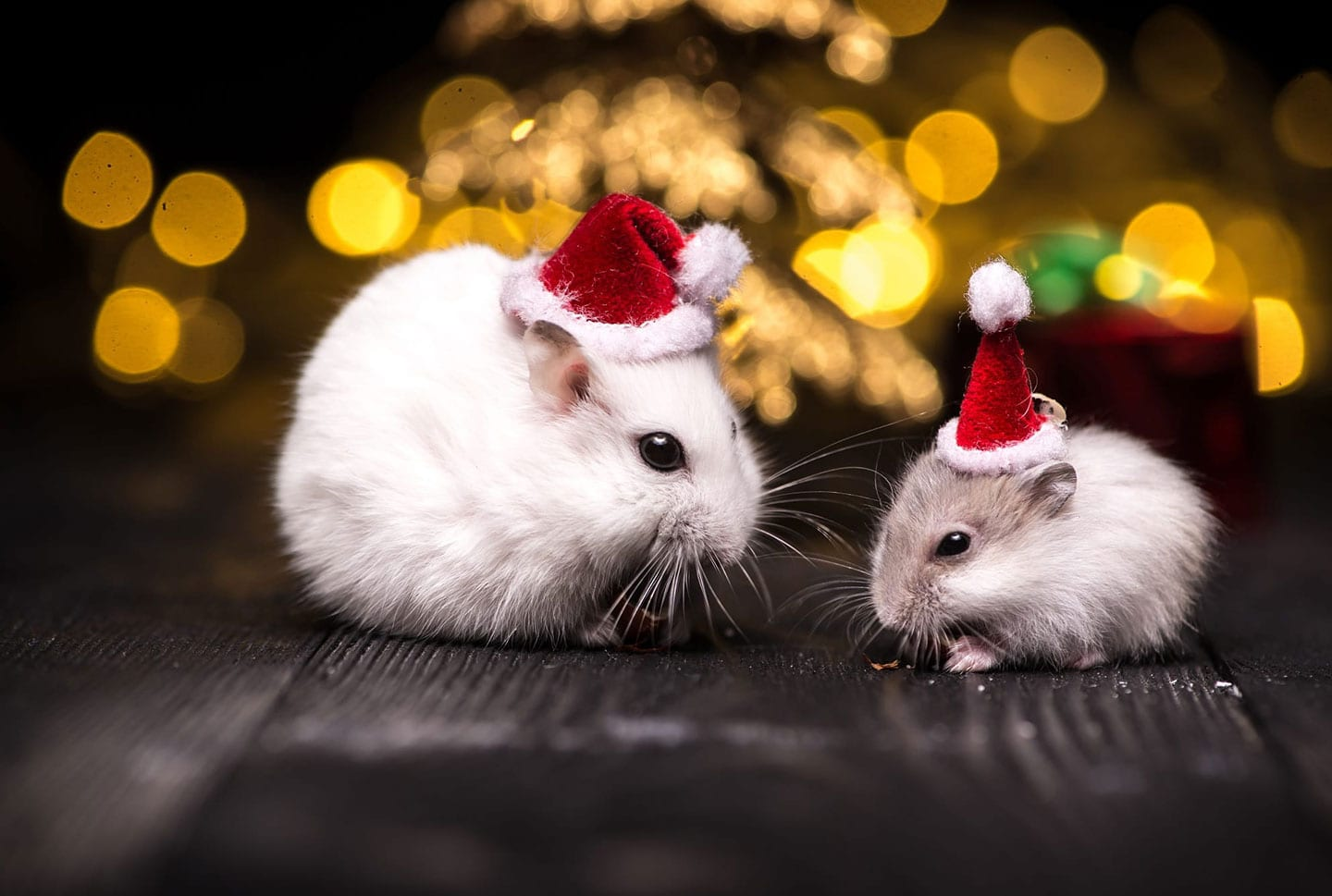 holiday pest control tips maryville il