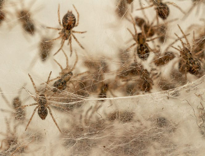 holiday pest myths in maryville il