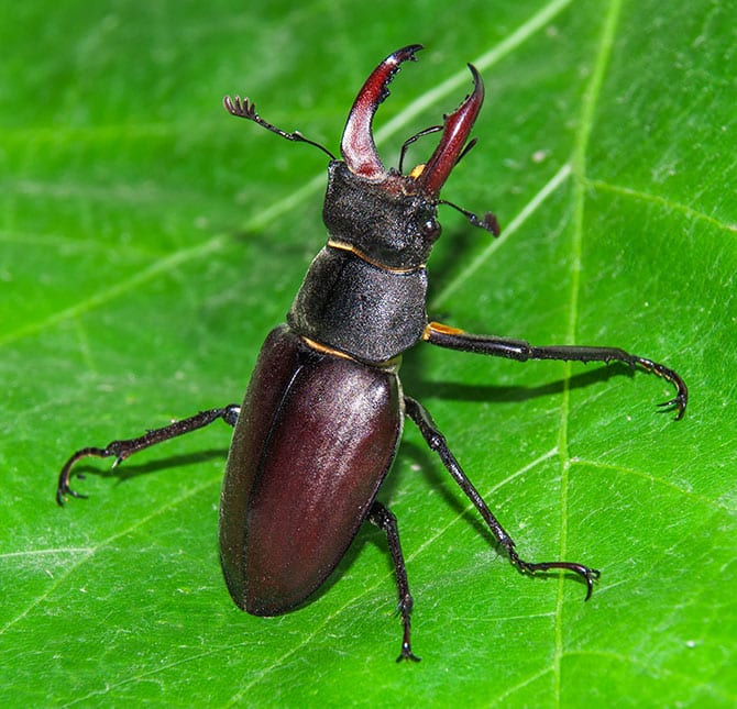 common fall pests in fairview heights il