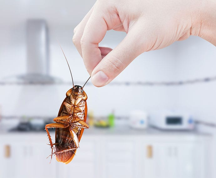 cockroaches removal service in collinsville il