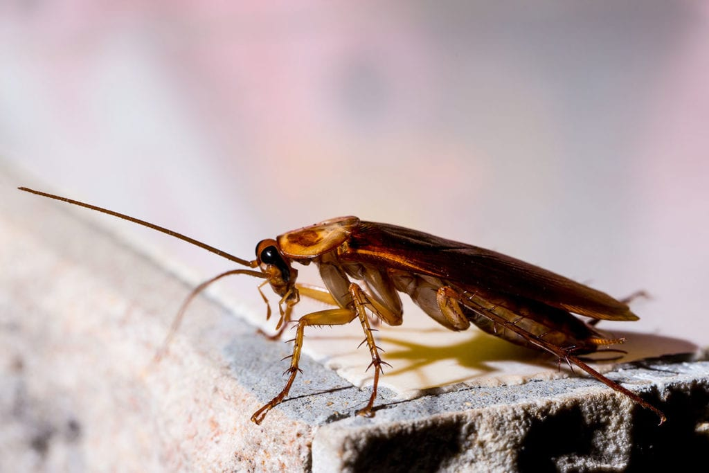 cockroaches removal service in bunker hill illinois