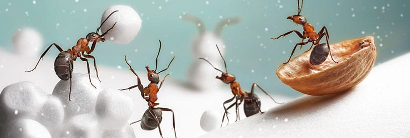 winter weather affecting ants in benld il