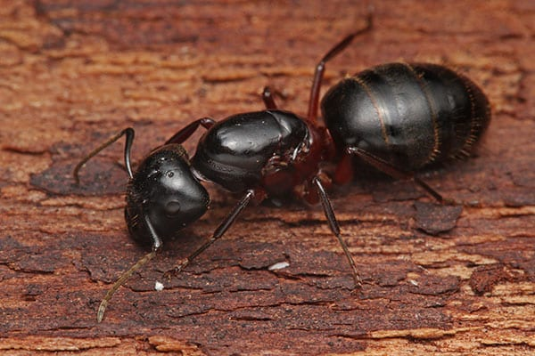 preventing ants from home in grafton il