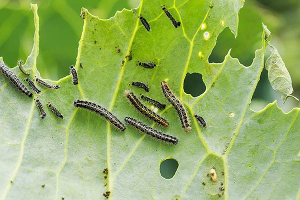 insects prevention in granite city illinois