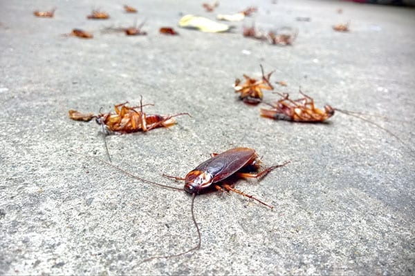 cockroach control in hamel il