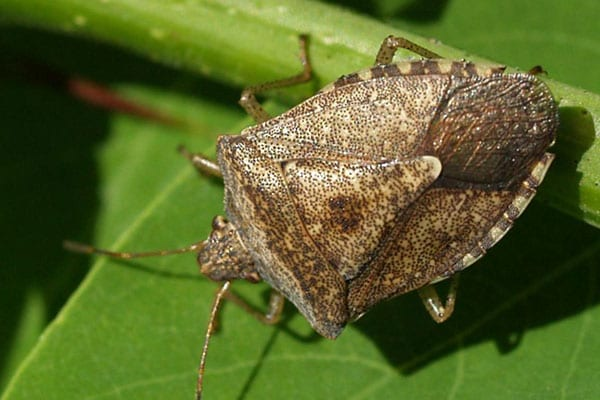 stink bug removal company in highland il