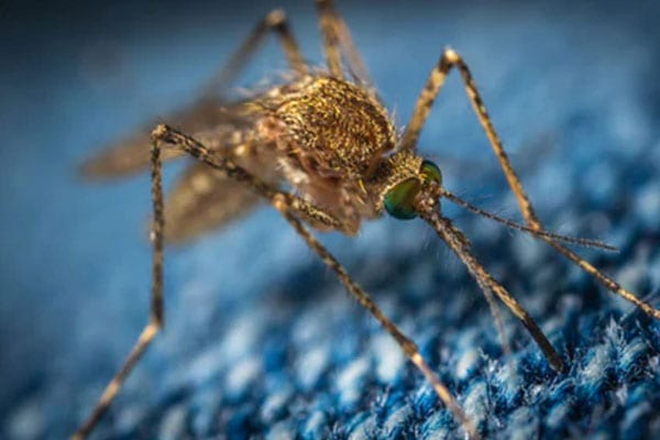mosquito removal company in highland illinois