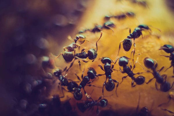 ant removal company in holiday shores il