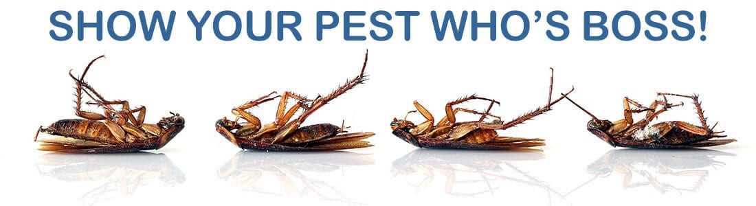 insect control holiday shores illinois