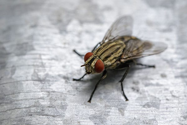 fly removal company in maryville illinois