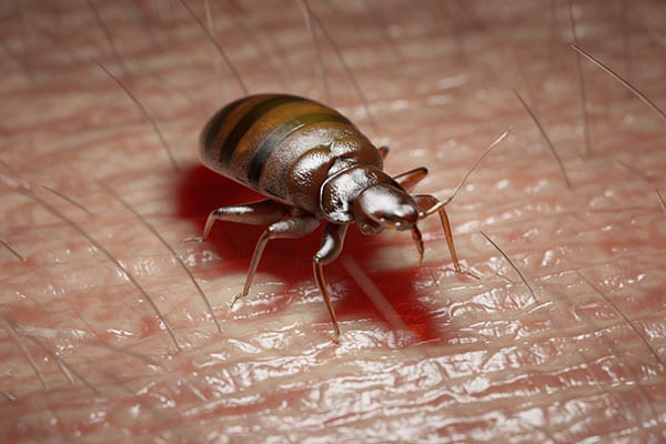 bed bugs pest control in meadowbrook illinois