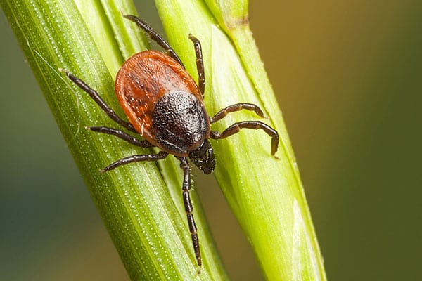 local pest control services south roxana il